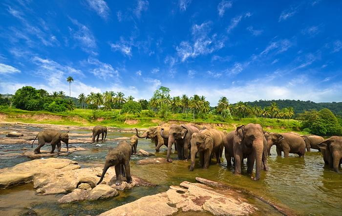 Elephants are inherent elements of Sri Lanka's landscape.